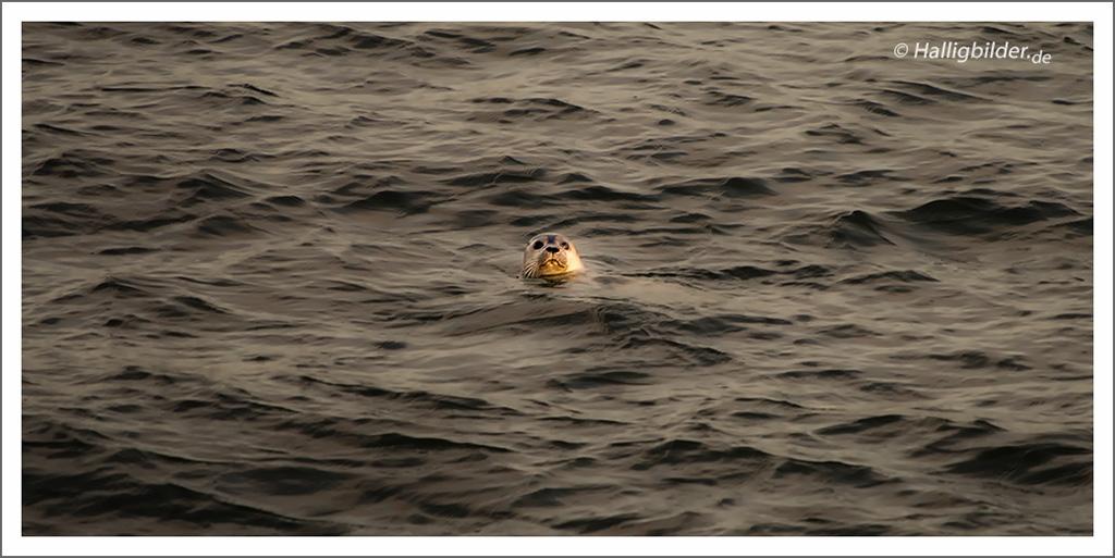 | Nordsee | zw. Hooge u. Langeneß | . . .