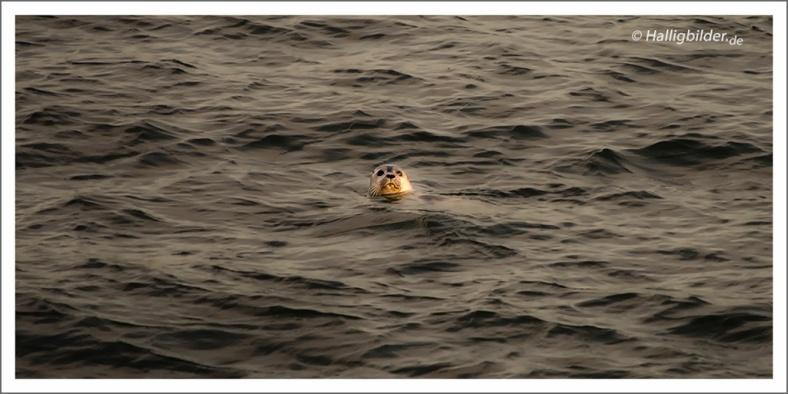   Nordsee   zw. Hooge u. Langeneß   . . .