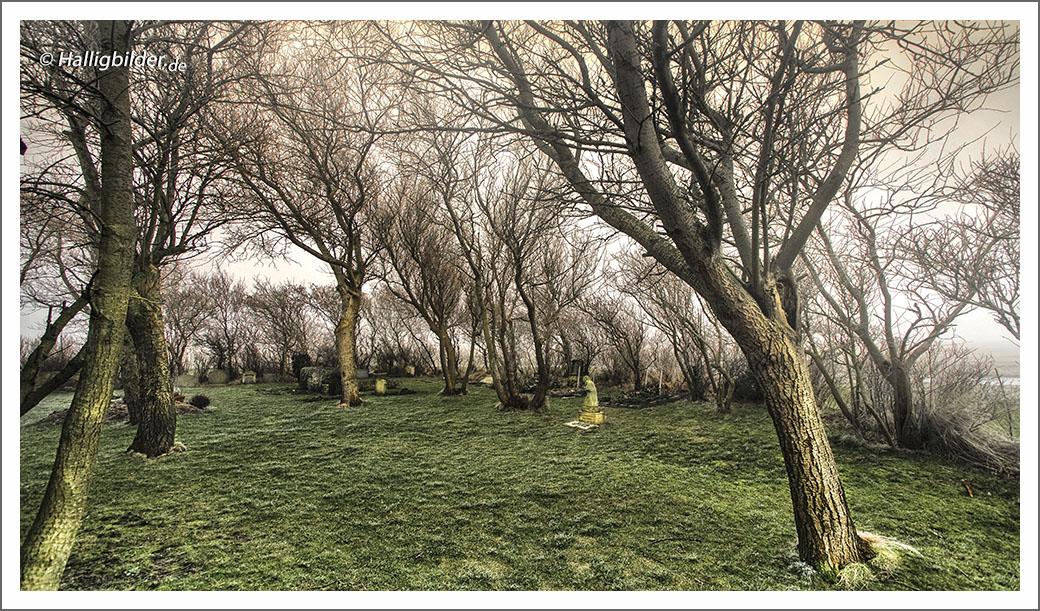 | Halligen | Langeneß | Kirchhofswarf | . . . Friedhof Nordmarsch