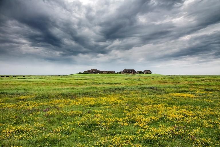 Salzwiese vor der Ketelswarf (die Salzwiese wird bis zu 20 mal pro Jahr vom Meer überflutet, dort wachsen nur ganz bestimmte salzverträgliche Pflanzen)