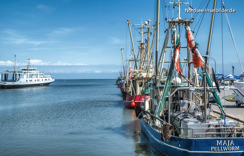 | Nordseeinseln | Pellworm | ...Fischerboot-Hafen