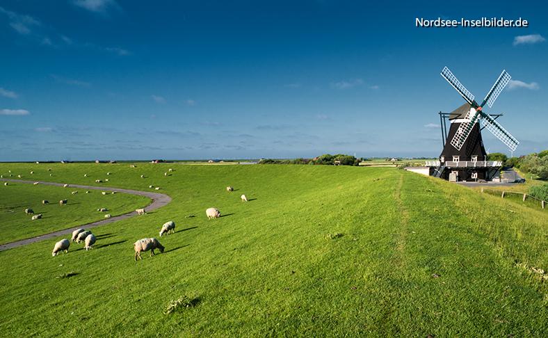 | Nordseeinseln | Pellworm | ...Nordermühle