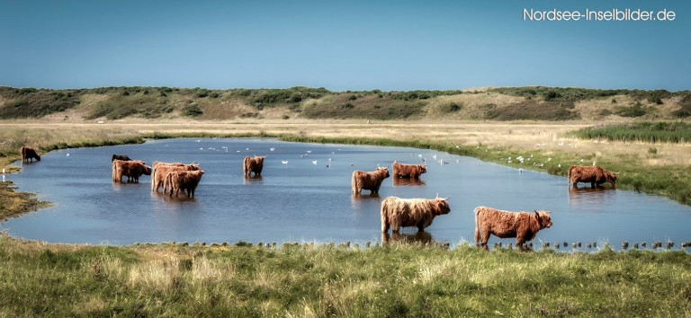 | Nordseeinseln | Langeoog | ...es ist viel zu heiß