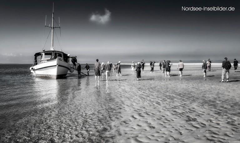 Anlandung auf Norderoogsand (Außensand im nordfriesischem Wattenmeer)