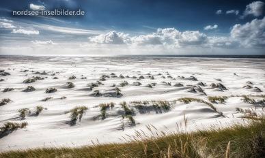 junge Stranddünen zwischen Nebel und Norddorf