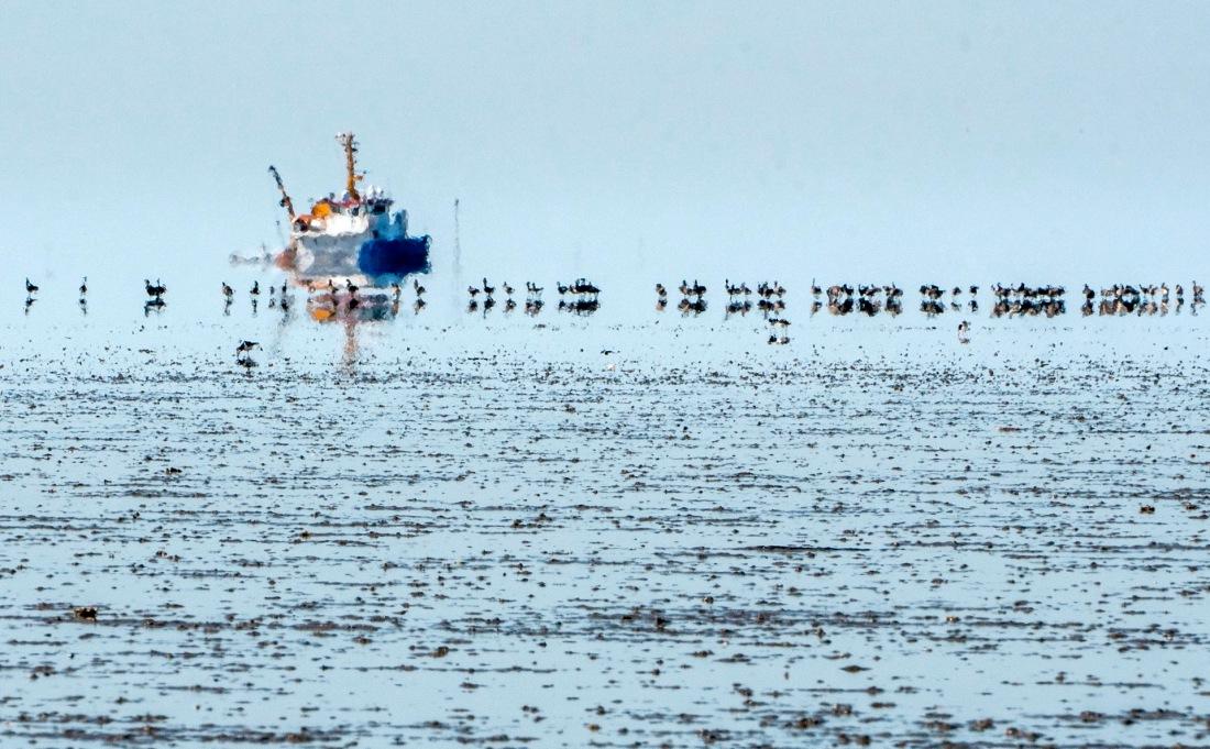 Ringelgänse vorm Geisterschiff